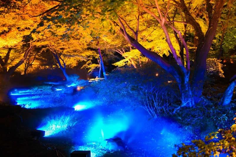 六義園 紅葉ライトアップ 水香江