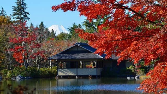 国営昭和記念公園 黄葉紅葉まつり