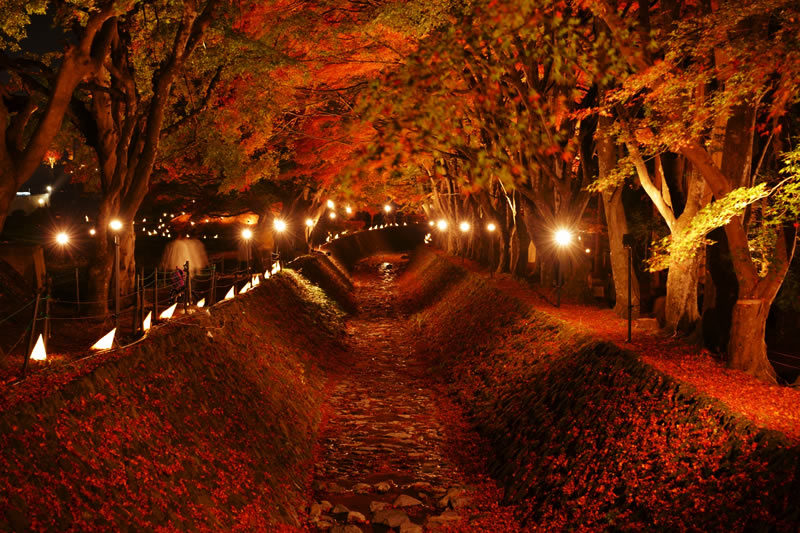 富士河口湖 紅葉まつり