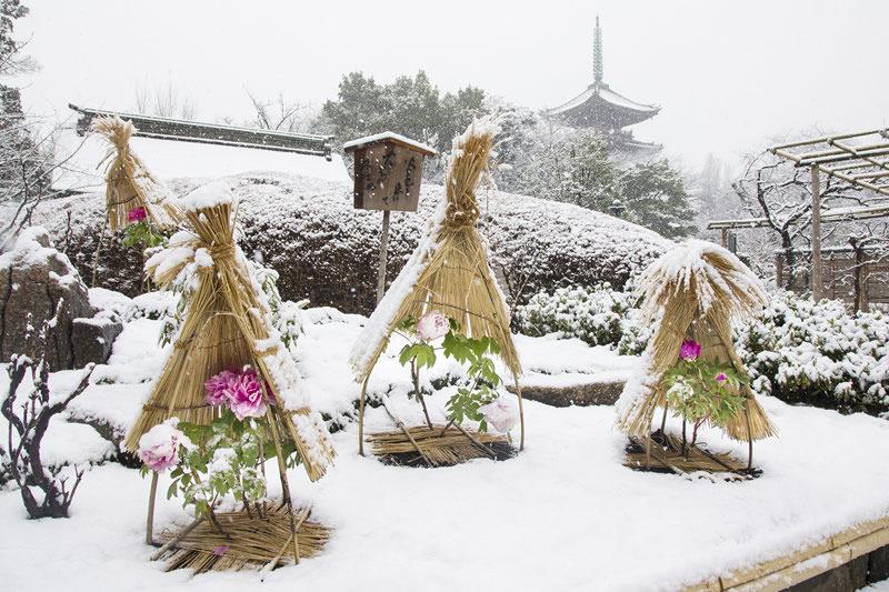 上野東照宮 冬ぼたん祭り
