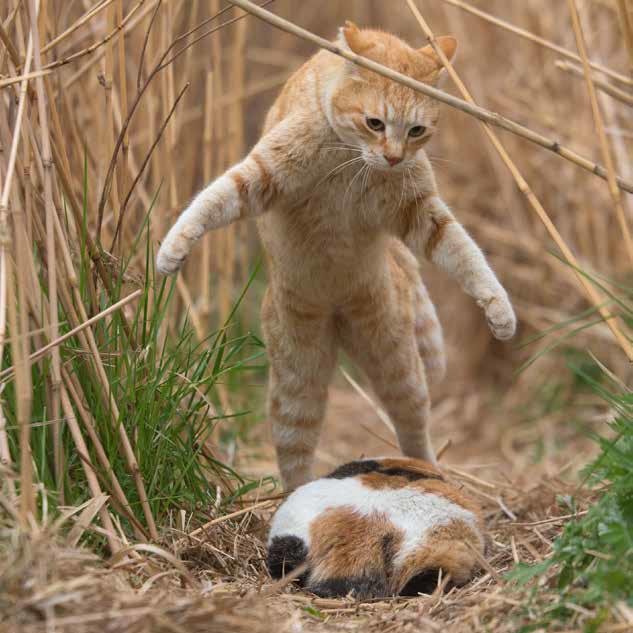 沖昌之写真展 必死すぎるネコ