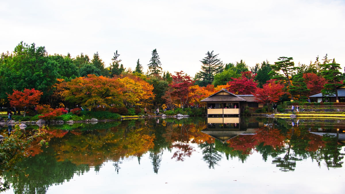 昭和記念公園 黄葉紅葉まつり