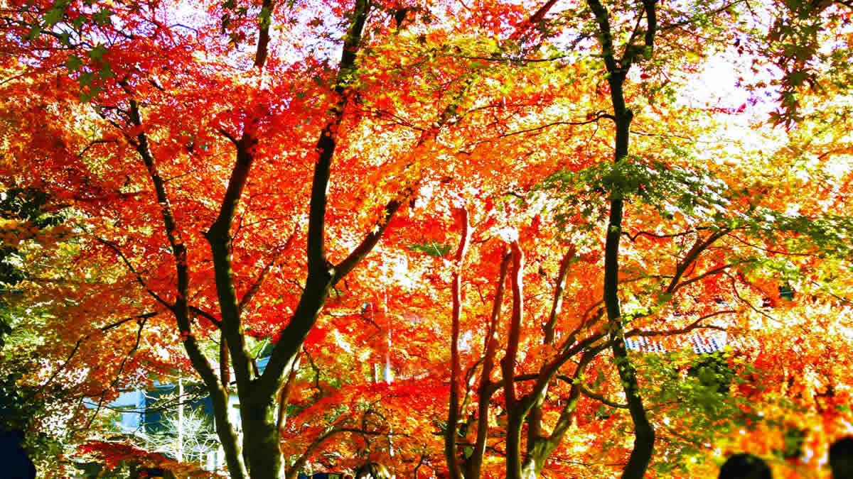 高尾山紅葉まつり