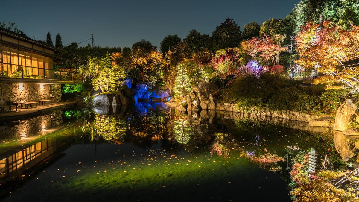 目白庭園 紅葉ライトアップ