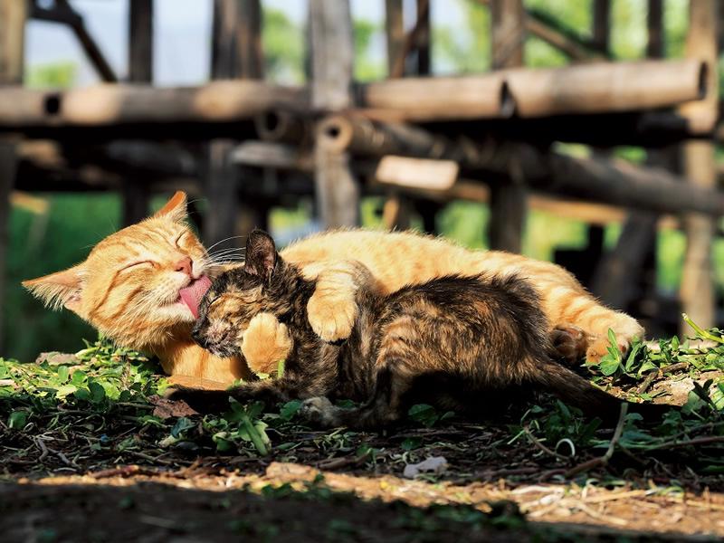 岩合光昭写真展 世界ネコ歩き あるがままに、水と大地のネコ家族