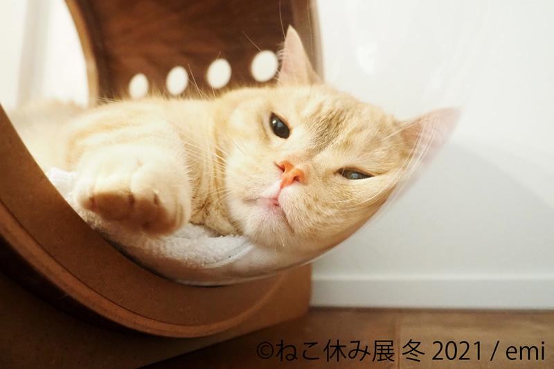 猫の合同写真展&物販展「ねこ休み展 冬 2021」