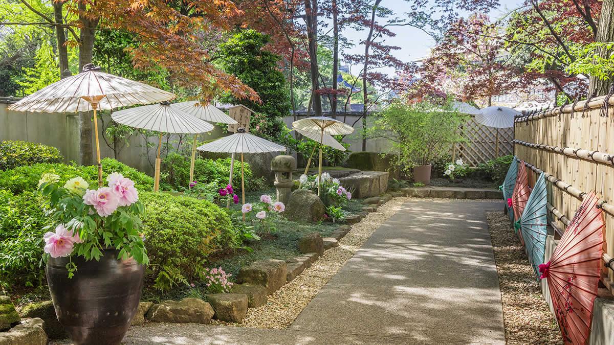 上野東照宮ぼたん苑「春のぼたん祭」
